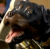 Triumph the Insult Comic Dog IAVMMChristmasM