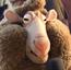 Sheep Reporter