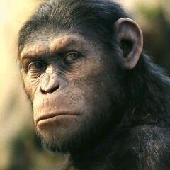 <b>César</b> en <b>El Planeta de los Simios</b>