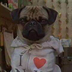 Frank, el perro en <a href=