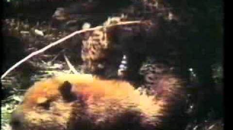 Santiago Munevar Rey - Grandes Gatos