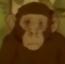 Chimpanzee 1 (Ep9-S2) MB