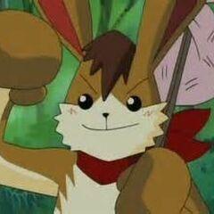 Hare en <a href=