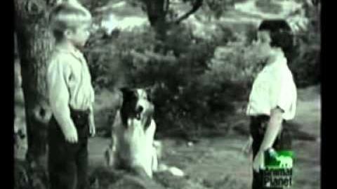 Lassie - TV Serie (Español Latinoamericano)