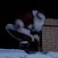 TSC Santa original