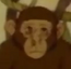 Chimpanzee 2 (Ep9-S2) MB