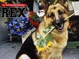 Rex: El regreso