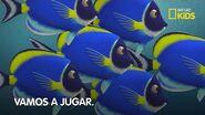 Carrera por el Arrecife -- Episodio Completo -- Nat Geo Kids
