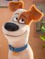 Max-Pets