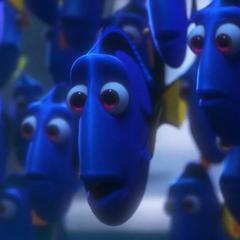Uno de los peces cirujanos también en <a href=
