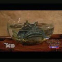 Yamakoshi (pez) en <a href=
