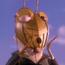 JATGP Grasshopper2
