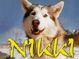 Nikki, el perro salvaje