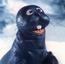 Seal SCICTT