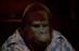 Monkey54