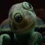 Turtle 1 KSY