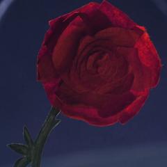 La Rosa en <a href=