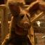 Jack Rabbit KSY
