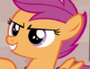 Scootaloo suggests doing more reconnaissance S7E8