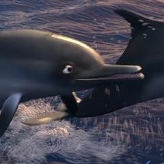 Delfín en <a href=