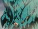 Aragami árbol