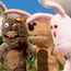 31M Conejos