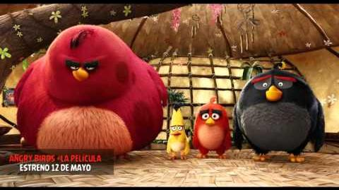Angry Birds Spot