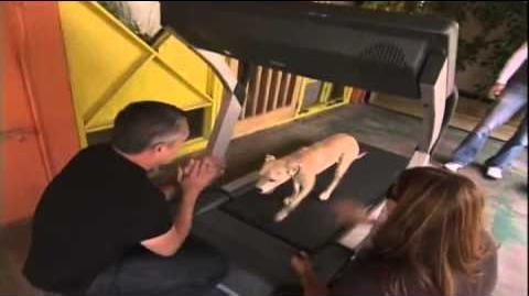 El Encantador de Perros Intro o Opening - Español Latino-0