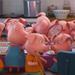 Piglets1 Sing