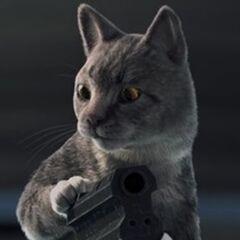 El gato en el episodio <a href=