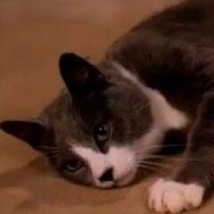 Gatito también en <a href=