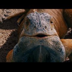 Chico, la Iguana en <a href=