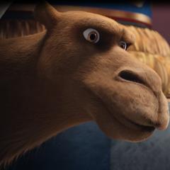 Cyrus, el camello en <a href=