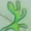 Mistletoe 12 TCT