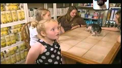 Llegó Honey Boo Boo ¿Qué opinan de este tipo de programas?
