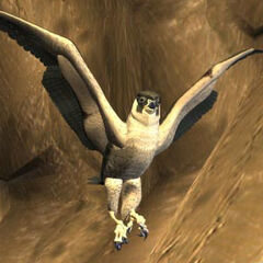 Águila en <a href=