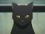 Yoruichi Shihouin gato