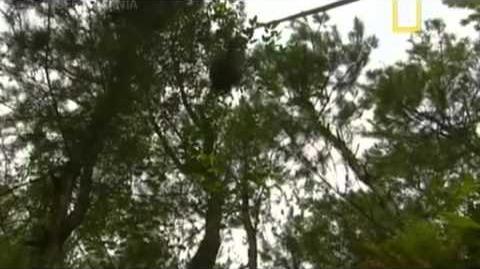 NatGeo Insectomania ep3 - Insectos Medicos Español Latino parte 3 4