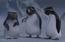 PinguinosAncianos SU