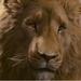 Aslan-Narnia2