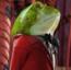 Frog2AIW10