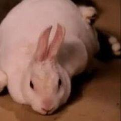 Conejo en <a href=