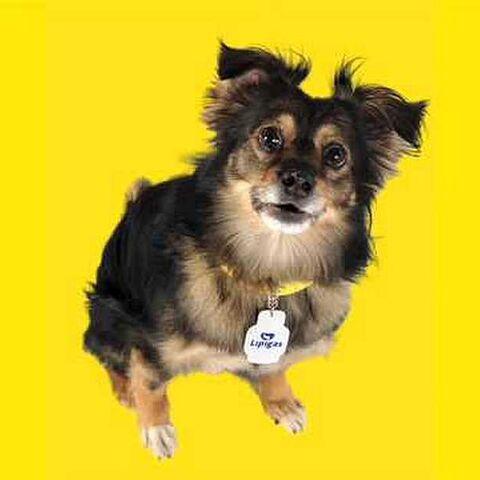 La voz del perrito Spike en diversos comerciales de Lipigas, su personaje más conocido.