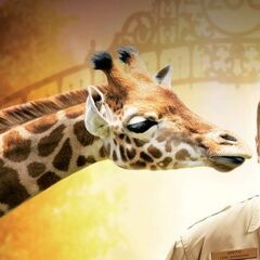 Molie la jirafa (<a href=