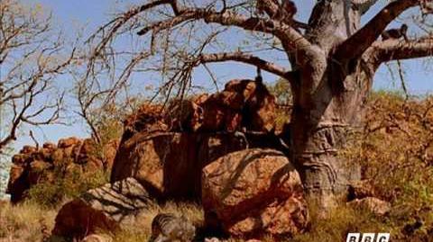 Australopitechus en familia