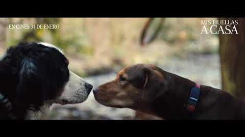 Mis Huellas a Casa - Cautiverio 30' - Sony Pictures