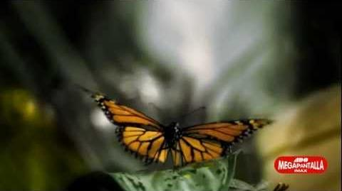 El Vuelo de las Monarca 3D en la Megapantalla IMAX de Papalote Museo del Niño