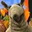 Ollie the Tapir AS