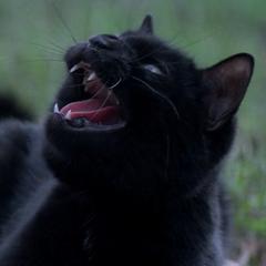Salem en <a href=