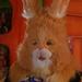 ConejoSC2